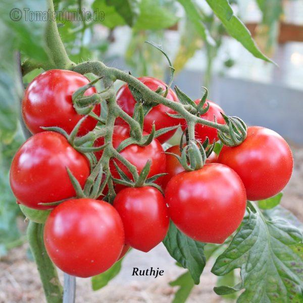 Tomatensorte Ruthje