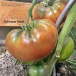 Tomatensorte Schwarze Sarah