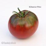 Tomatensorte Schwarzer Prinz