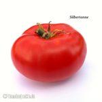 Tomatensorte Silbertanne
