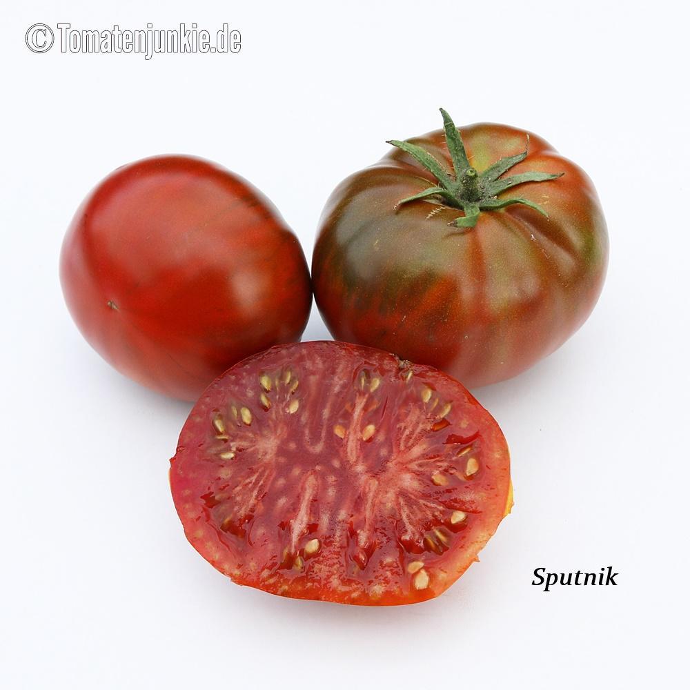 Tomatensorte Sputnik