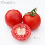 Tomatensorte Tamina
