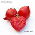 Tomatensorte Teton de Venus