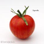 Tomatensorte Tigerella