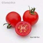 Tomatensorte Veni Vidi Vici
