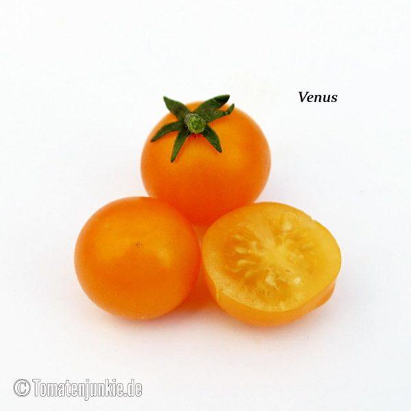 Tomatensorte Venus