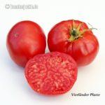 Tomatensorte Vierländer Platte