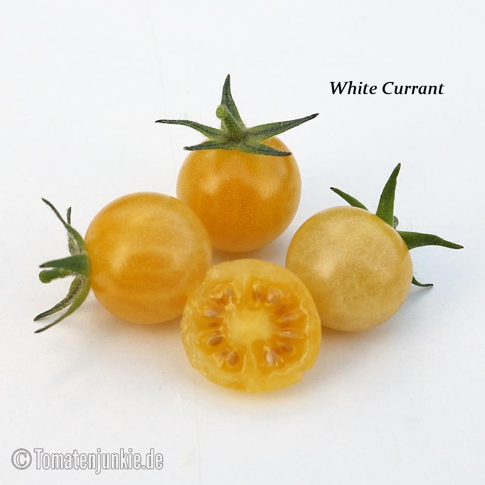 Tomatensorte White Currant