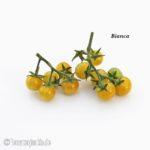 Tomatensorte Bianca