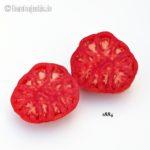 Tomatensorte 1884