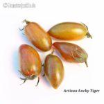 Tomatensorte Artisan Lucky Tiger