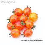 Tomatensorte Artisan Sunrise Bumblebee