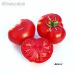 Tomatensorte Aussie