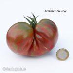 Tomatensorte Berkeley Tie-Dye