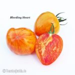 Tomatensorte Bleeding Heart