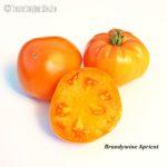 Tomatensorte Brandywine Apricot