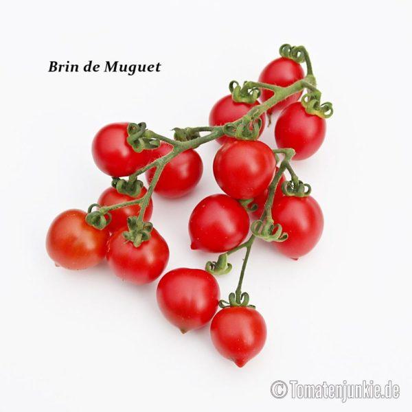 Tomatensorte Brin de Muguet