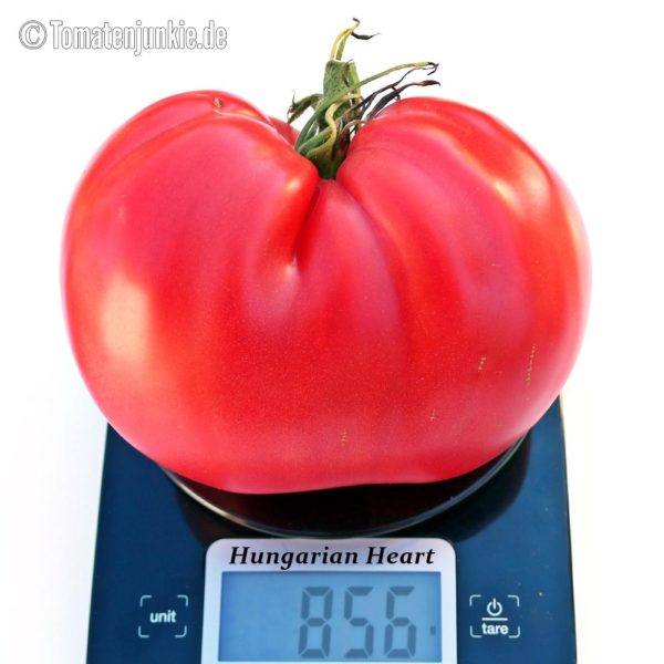 Tomatensorte Hungarian Heart