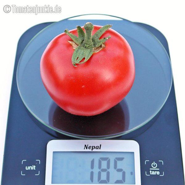 Tomatensorte Nepal
