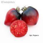 Tomatensorte Sgt. Pepper's