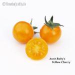 Tomatensorte Aunt Ruby's Yellow Cherry