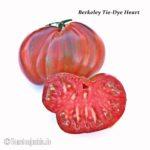 Tomatensorte Berkeley Tie-Dye Heart