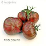 Tomatensorte Berkeley Tie-Dye Pink
