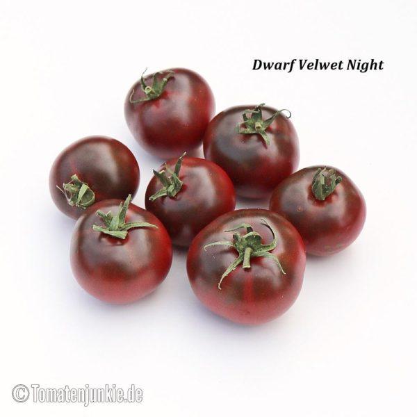 Tomatensorte Dwarf Velvet Night
