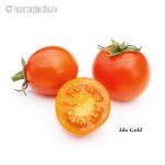 Tomatensorte Ida Gold