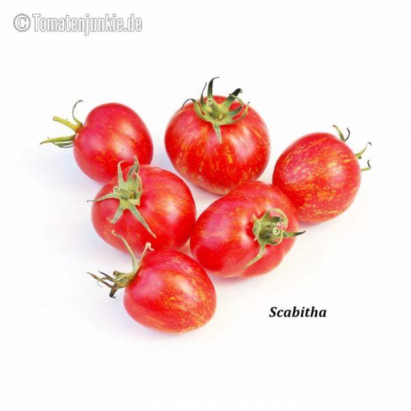 Tomatensorte Scabitha