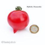 Tomatensorte Hybrid-2 Tarasenko